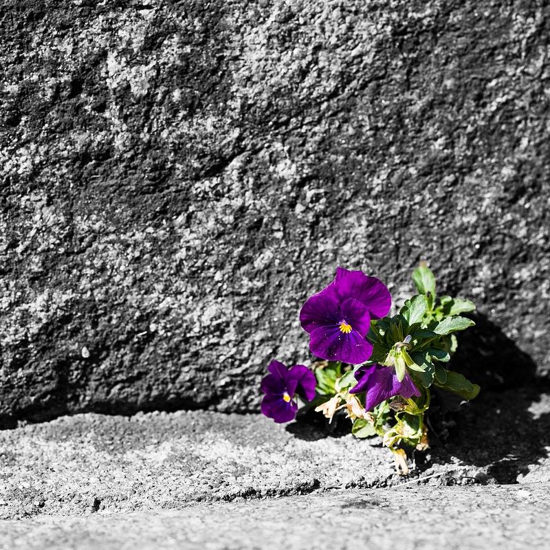 Rennes les Lices - Fleur de pierre