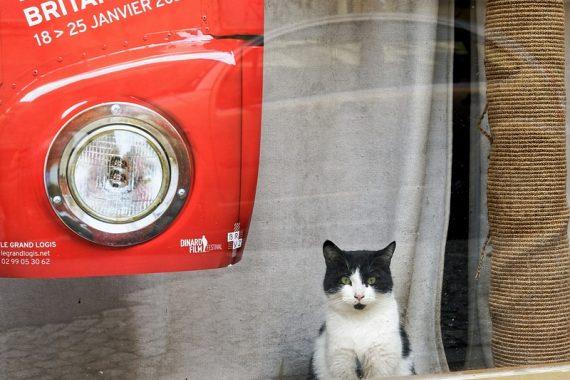 Le chat dans la vitrine
